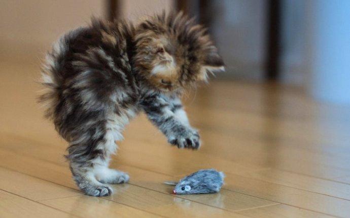 Как сделать игрушку для котенка своими руками?