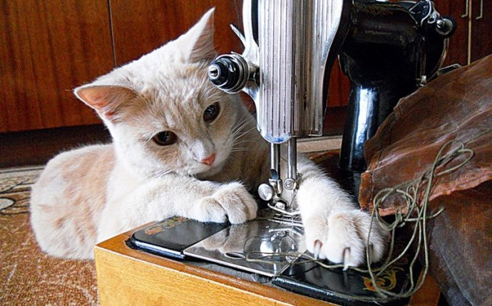 Сшить кота или кошку